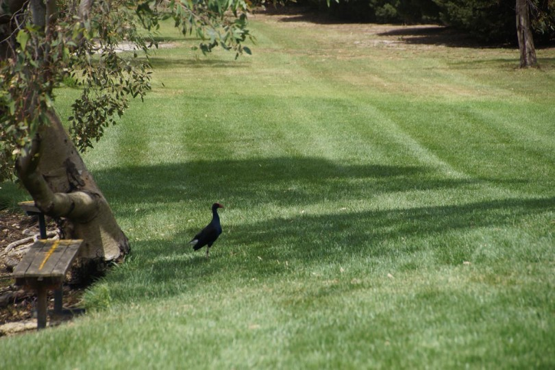 Lawn Mowing - Grounds Maintenance Geelong